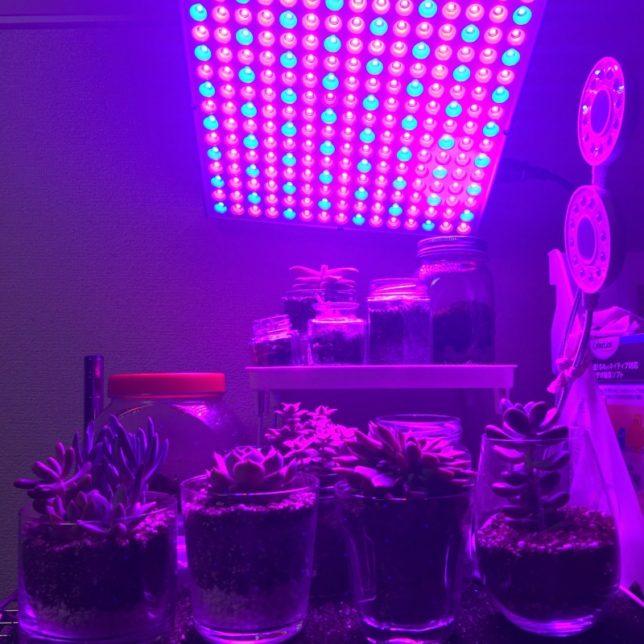 育成ライト LED 赤青 45W